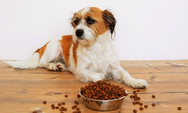 Best Dog Food For Dogs With Sensitive Stomach