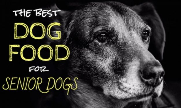 Best Dog Food For Senior Dogs [Small And Large Breed] Reviews