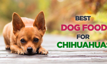 Best Dog Food for Chihuahuas-Buyer's Guide